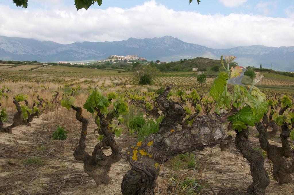 Španělsko - Víno